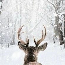 LET IT SNOW ❄️ - Qui rêve d'un Noël blanc cette année ?⠀⠀⠀⠀⠀⠀⠀⠀⠀ 📸 DM US⠀⠀⠀⠀⠀⠀⠀⠀⠀ -⠀⠀⠀⠀⠀⠀⠀⠀⠀ #reindeer #whitexmas #letitsnow