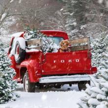 J-4 🎄 - Qu'allez-vous faire en ce premier jour d'hiver ? Team boulot ou team vacances ?⠀⠀⠀⠀⠀⠀⠀⠀⠀ 📸 @sarahkjp⠀⠀⠀⠀⠀⠀⠀⠀⠀ -⠀⠀⠀⠀⠀⠀⠀⠀⠀ #noel #joyeuxnoel #hiver
